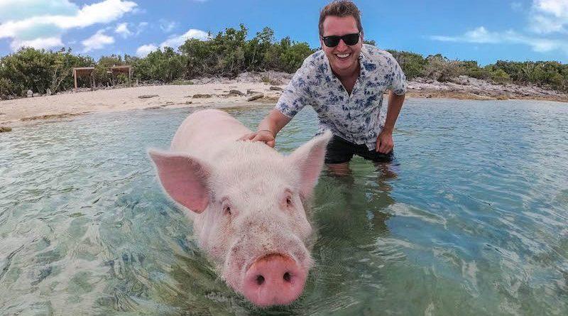 germanbackpacker.com: Alles zu den schwimmenden Schweinen der Karibik!