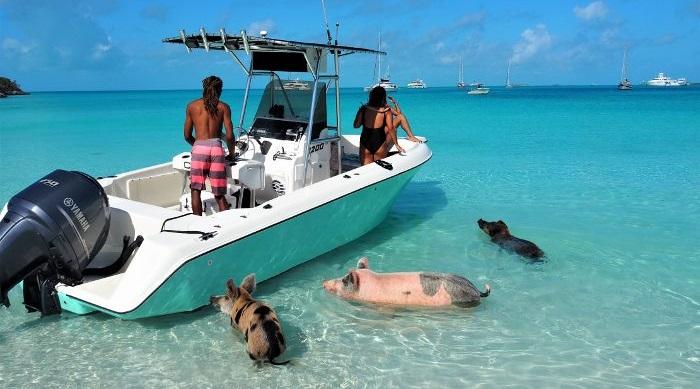 traveller50plus.eu: Kuriose Bahamas – schwimmende Schweine und Baden mit Haien